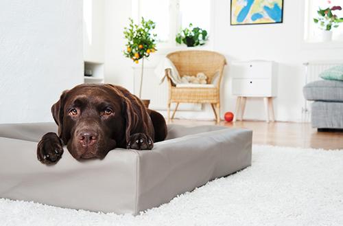 Mycket snygg biabädd, kallas framförallt hundbädd och hundsäng