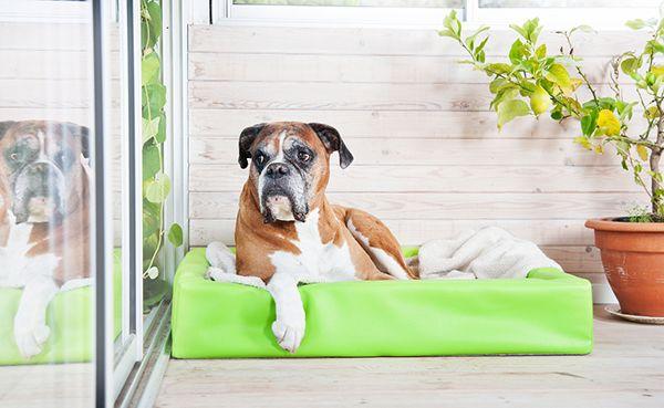 biabädd och hundtäcke